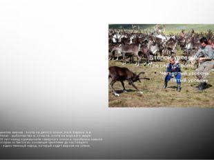 Традиционное занятие Традиционное занятие эвенов - охота на дикого оленя, лос
