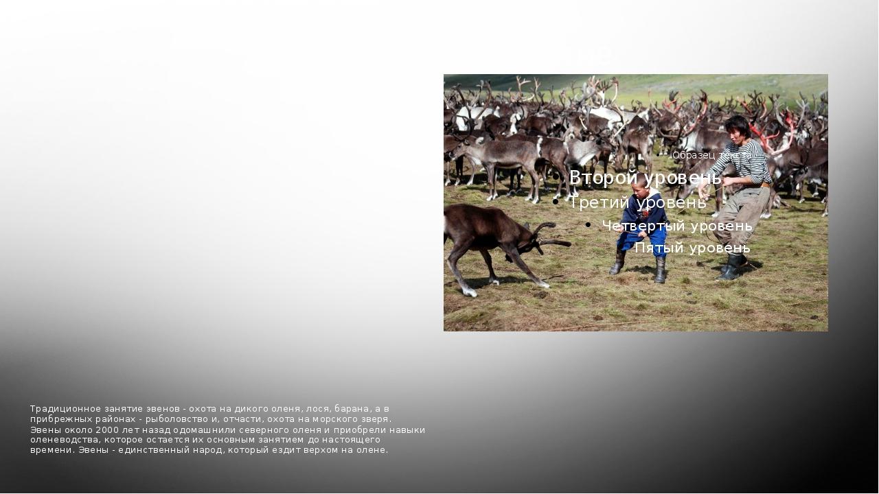 Традиционное занятие Традиционное занятие эвенов - охота на дикого оленя, лос...