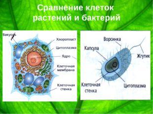 Сравнение клеток растений и бактерий Козлова Ольга Ивановна г. Вольск Козлова