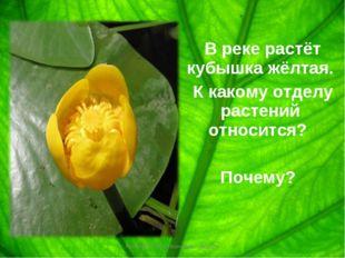В реке растёт кубышка жёлтая. К какому отделу растений относится? Почему? Ко