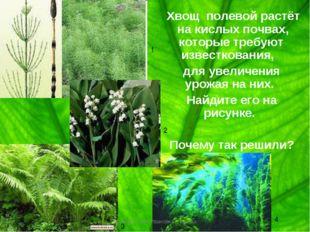 Хвощ полевой растёт на кислых почвах, которые требуют известкования, для уве