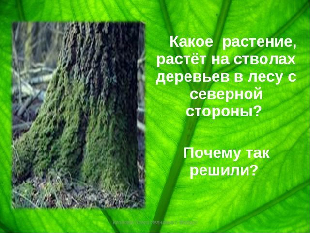 Какое растение, растёт на стволах деревьев в лесу с северной стороны? Почему...
