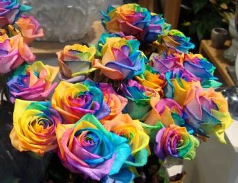 rainbow-flowers32.jpg