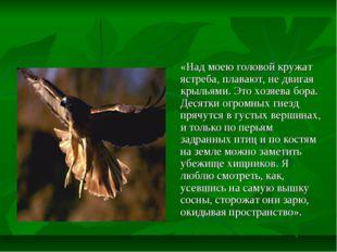 «Над моею головой кружат ястреба, плавают, не двигая крыльями. Это хозяева б