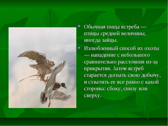 Обычная пища ястреба — птицы средней величины, иногда зайцы. Излюбленный спос...
