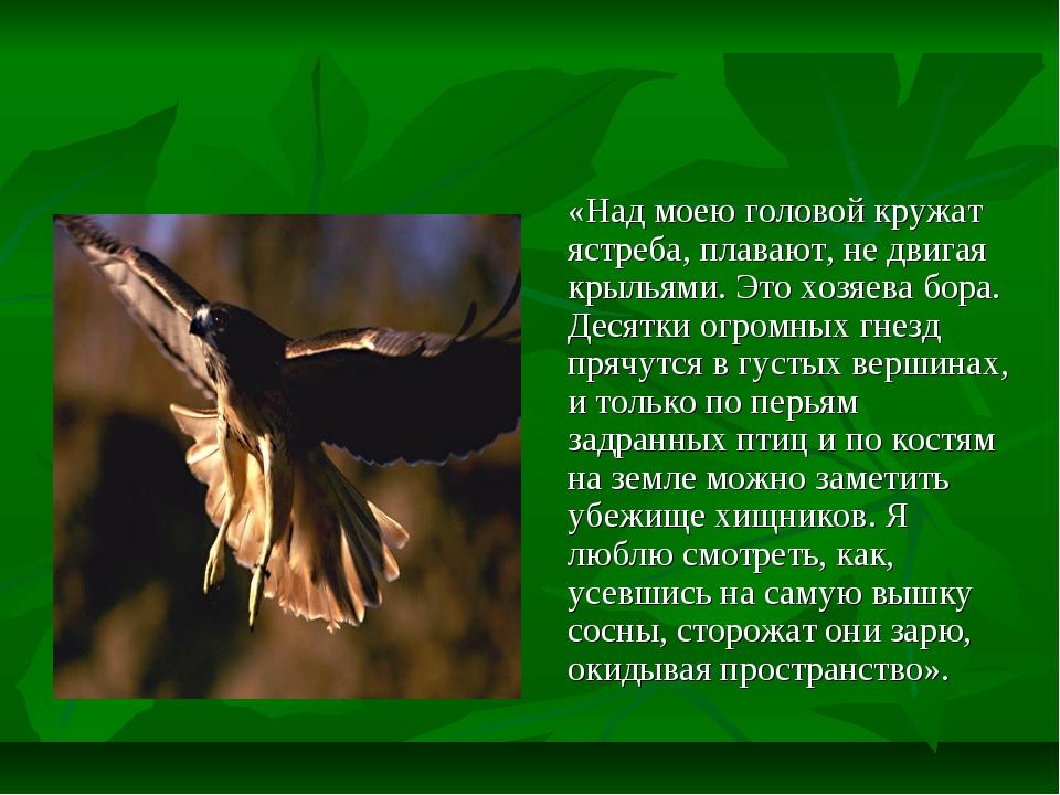 «Над моею головой кружат ястреба, плавают, не двигая крыльями. Это хозяева б...