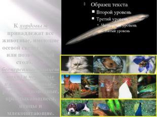 К хордовым принадлежат все животные, имеющие осевой скелет: хорду или позвон