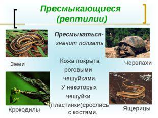 Пресмыкающиеся (рептилии) Пресмыкаться- значит ползать Кожа покрыта роговыми