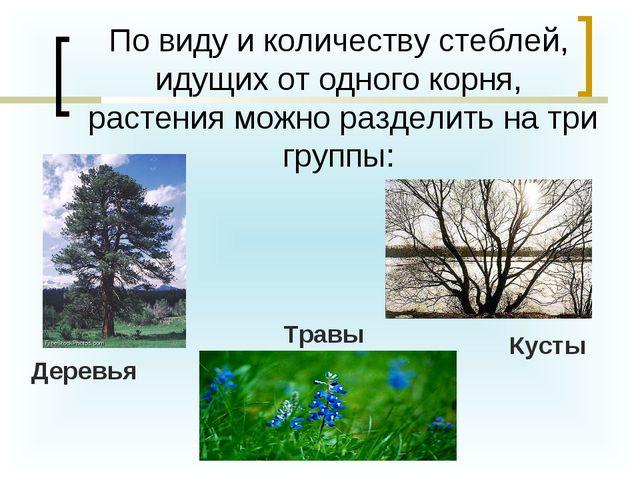 По виду и количеству стеблей, идущих от одного корня, растения можно раздели...