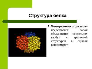 Структура белка Четвертичная структура– представляет собой объединение нескол