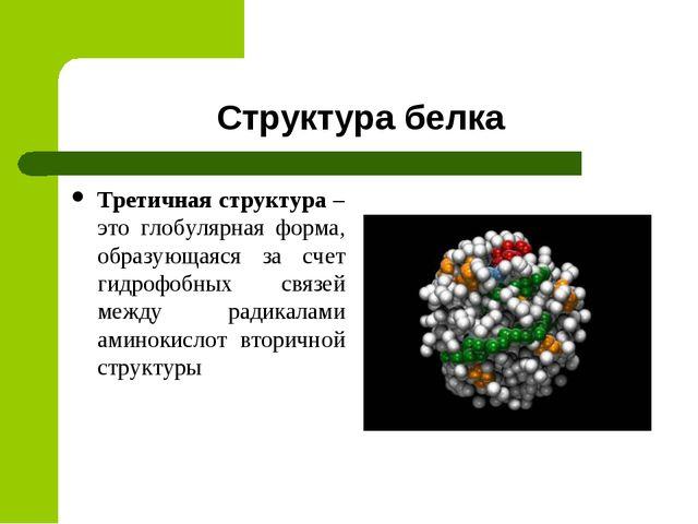 Структура белка Третичная структура – это глобулярная форма, образующаяся за...