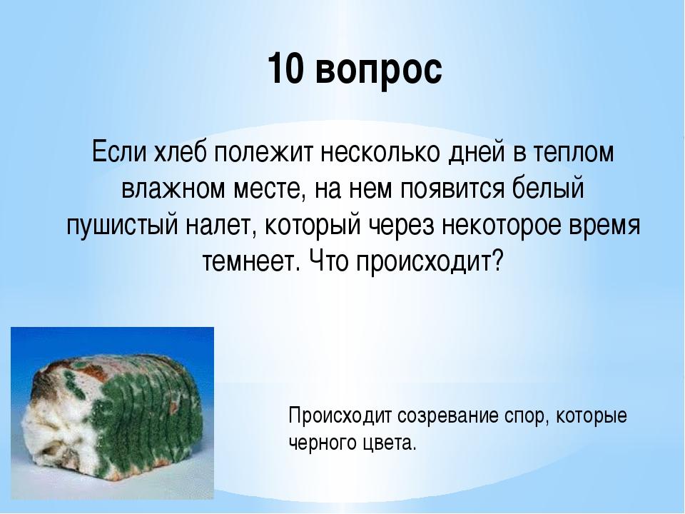 10 вопрос Если хлеб полежит несколько дней в теплом влажном месте, на нем поя...