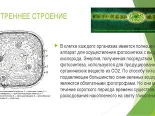 ВНУТРЕННЕЕ СТРОЕНИЕ В клетке каждого организма имеется полноценный аппарат дл