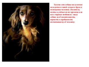 Тысячи лет собака заслуженно пользуется славой лучшего друга и помощника чел