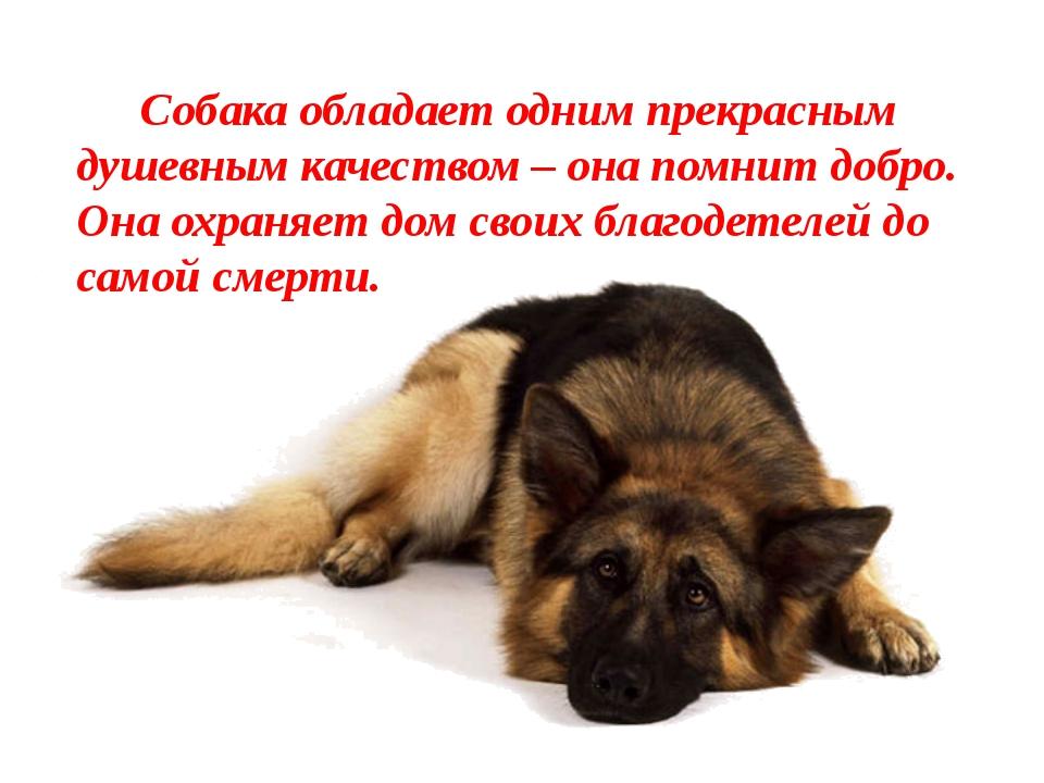 Собака обладает одним прекрасным душевным качеством – она помнит добро. Она...