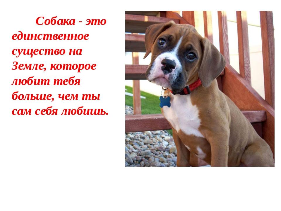 Собака - это единственное существо на Земле, которое любит тебя больше, чем...