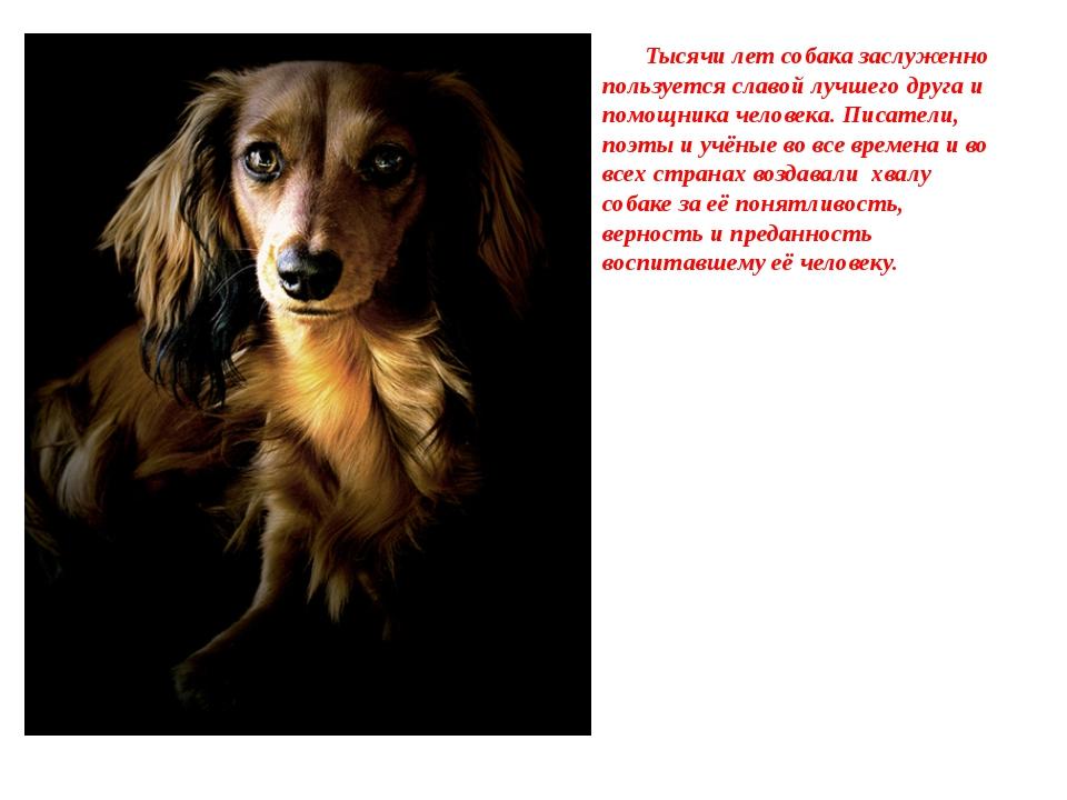 Тысячи лет собака заслуженно пользуется славой лучшего друга и помощника чел...