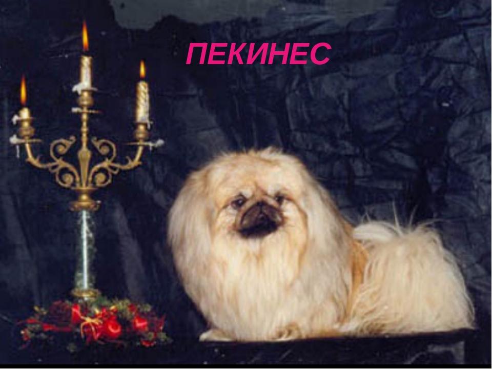 ПЕКИНЕС