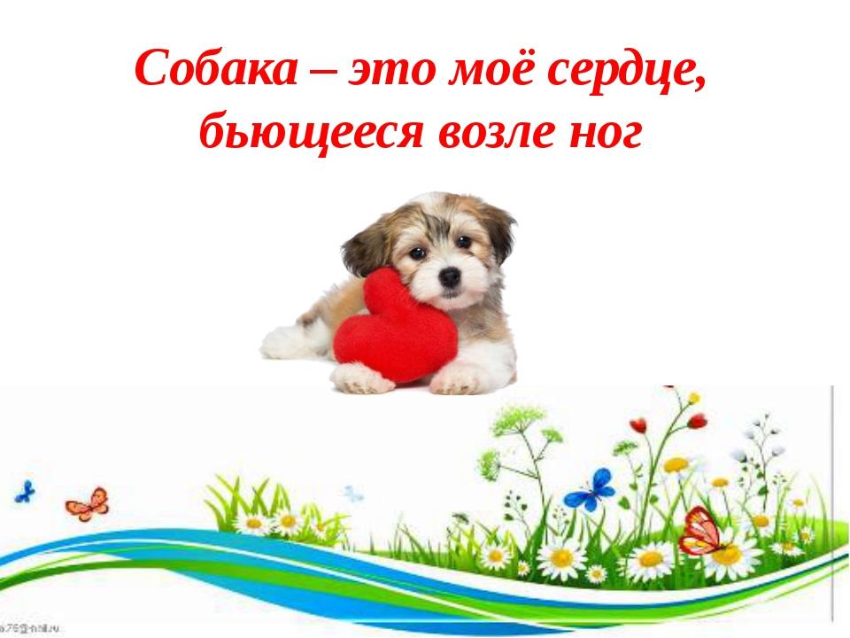 Собака – это моё сердце, бьющееся возле ног