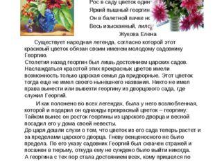 Георгин - символ всепобеждающей силы жизни. Рос в саду цветок один, Яркий пы
