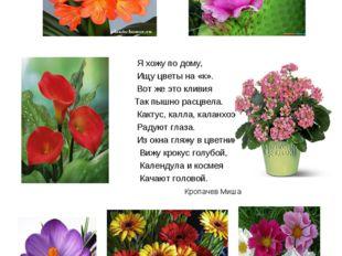 Цветы на букву «к» Я хожу по дому, Ищу цветы на «к». Вот же это кливия Так пы