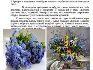 Незабудка - очень красивый и нежный цветок Разные народы складывают свои леге