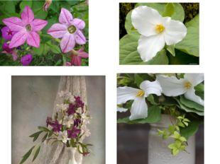 Увидев цветы, мы радуемся, восхищаемся, любуемся! Мы по ковру идём с тобой, Е