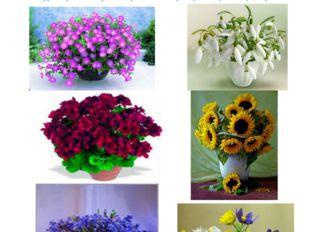 Имеющий в руках цветы плохого совершить не может. (В. Солоухин) Без цветов не