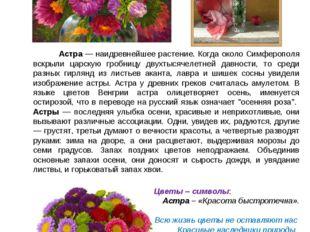Астра — наидревнейшее растение. Когда около Симферополя вскрыли царскую гроб