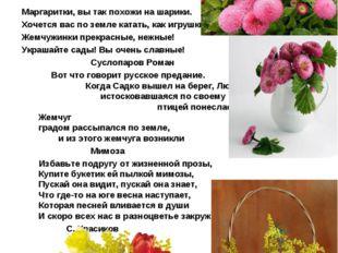 Маргаритка –в переводе с греческого- жемчужинка Еще Плиний дал маргариткам ро