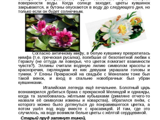 """Кувшинку-нимфею также называют """"дитя солнца"""": ее прекрасные цветки раскрываю..."""