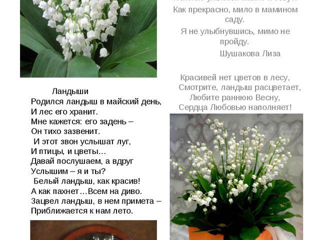 Ландыш - возвращение счастья . Лилия долин, цветущая в мае – ландыши. Ран...