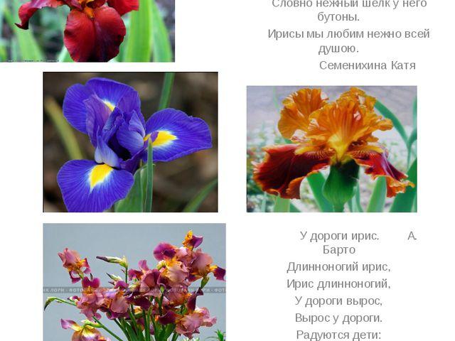 Ии Цвето – радуга – ирис или касатик С этого цветка лето начинается. Радугой...