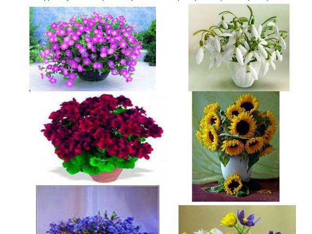 Имеющий в руках цветы плохого совершить не может. (В. Солоухин) Без цветов не...