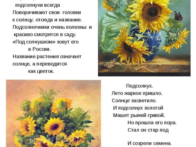 Подсолнух – жизнерадостный цветок Подсолнух - один из самых жизнерадостных цв...
