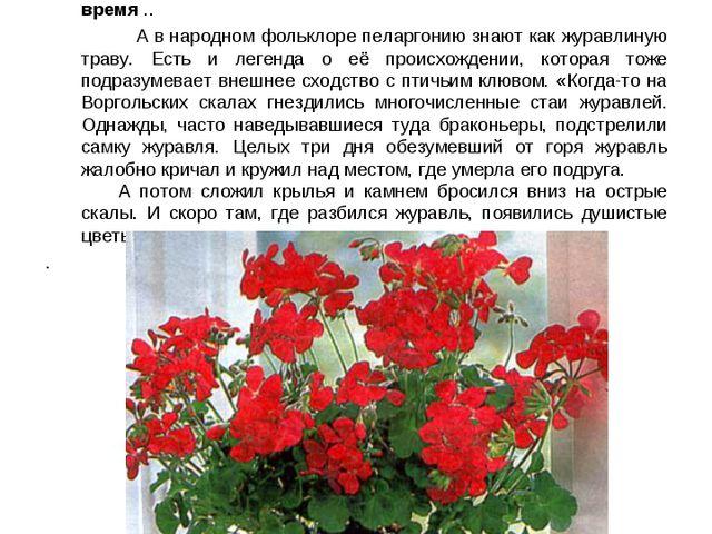 """Пеларгония. Название этого растения происходит от древнегреческого """"pelagros""""..."""