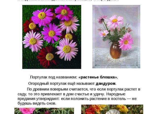 Пиретрум розовый, или Персидская ромашка Растение пиретрум очень похож на ро...