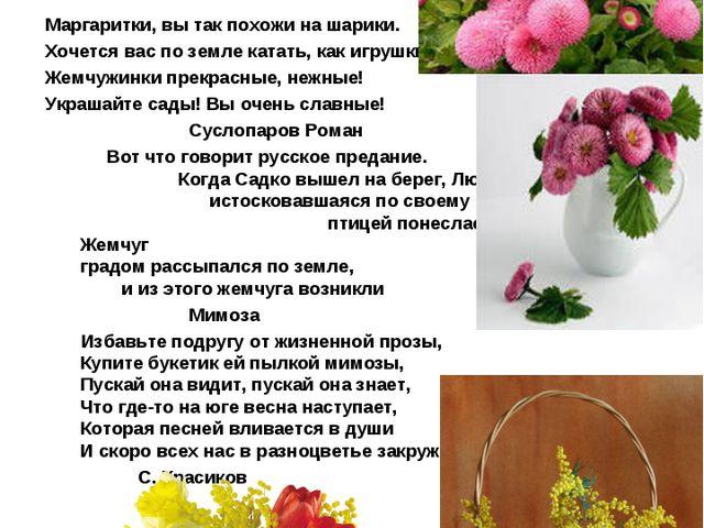 Маргаритка –в переводе с греческого- жемчужинка Еще Плиний дал маргариткам ро...
