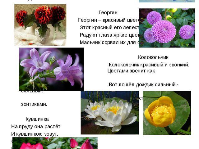 Страница Суслопарова Романа Цветы ласкают наши глаза, смягчают нравы. Василё...
