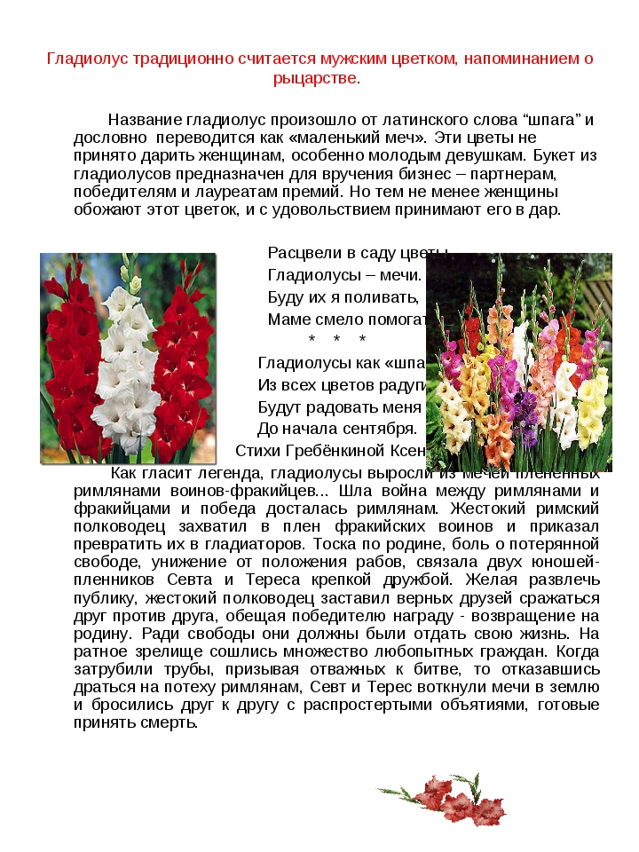 Гладиолус традиционно считается мужским цветком, напоминанием о рыцарстве. На...