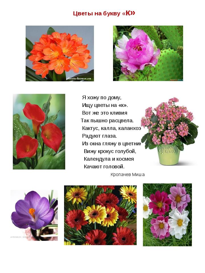 Цветы на букву «к» Я хожу по дому, Ищу цветы на «к». Вот же это кливия Так пы...