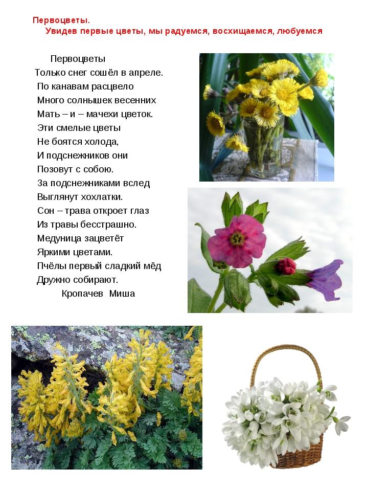Первоцветы. Увидев первые цветы, мы радуемся, восхищаемся, любуемся Первоцвет...