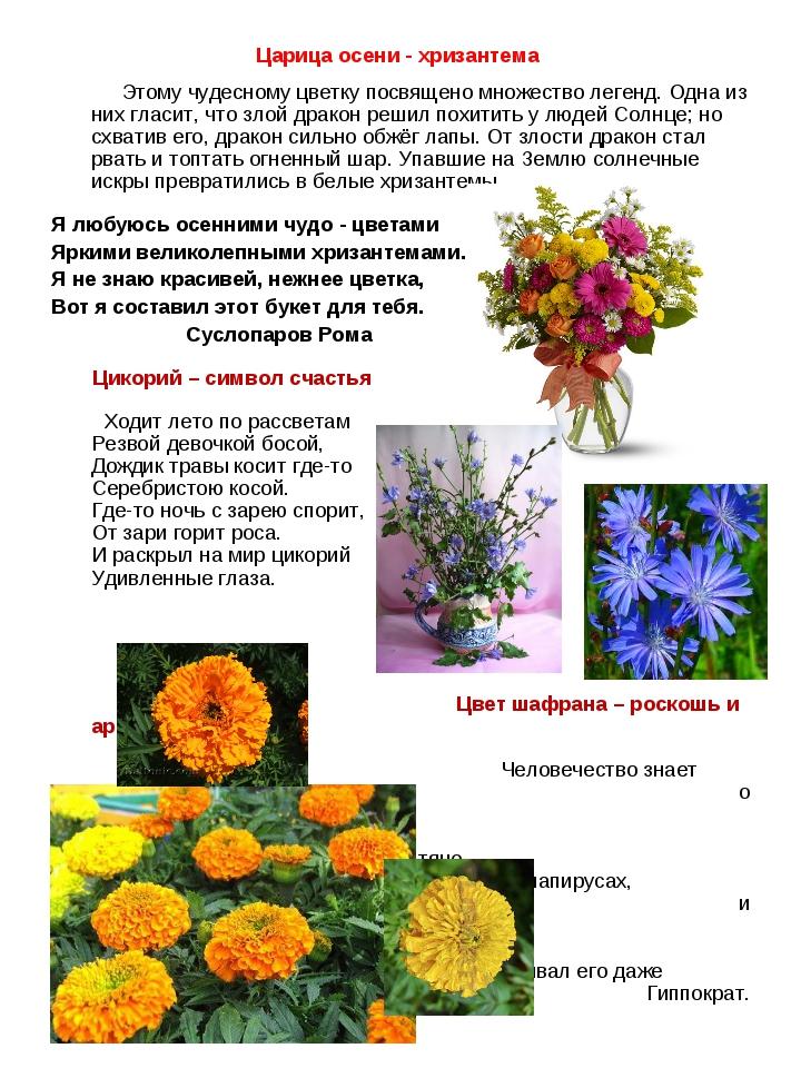 Царица осени - хризантема Этому чудесному цветку посвящено множество легенд....