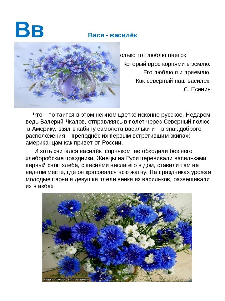 Вв Вася - василёк Я только тот люблю цветок Который врос корнями в землю. Его...