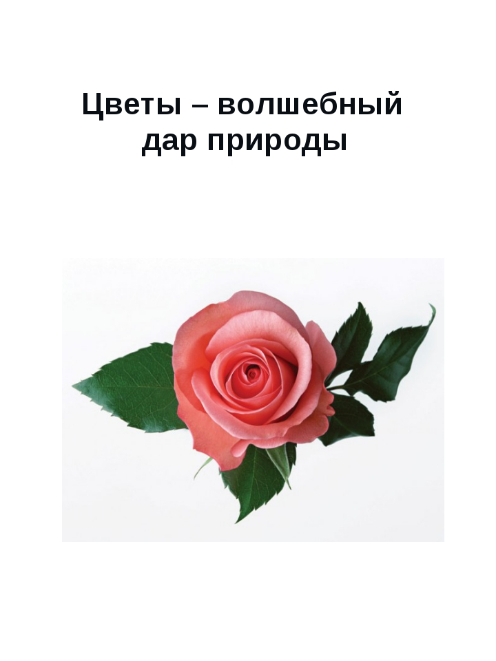 Цветы – волшебный дар природы Сюмси 2013