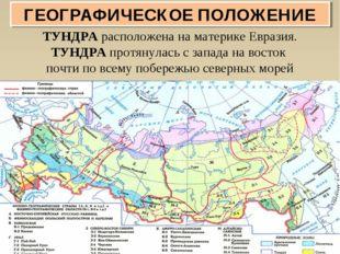 ТУНДРА расположена на материке Евразия. ТУНДРА протянулась с запада на восток