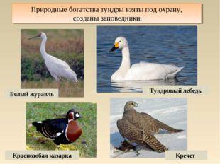 Природные богатства тундры взяты под охрану, созданы заповедники. Белый журав
