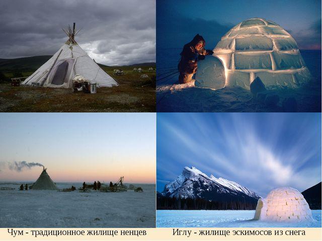 Иглу - жилище эскимосов из снега Чум - традиционное жилище ненцев