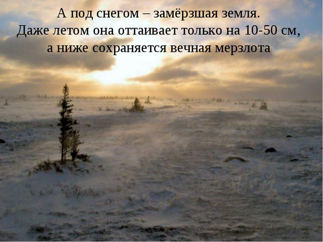А под снегом – замёрзшая земля. Даже летом она оттаивает только на 10-50 см,...