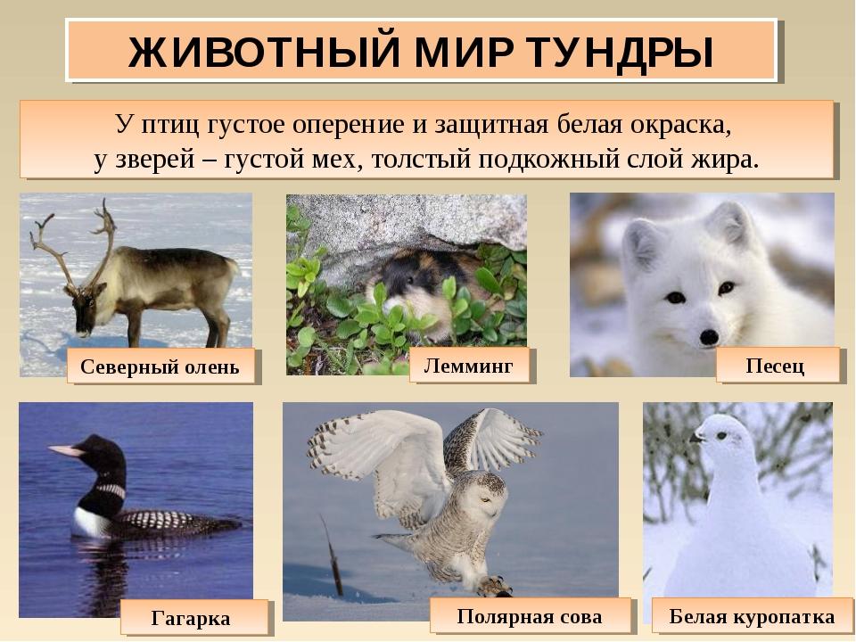 все о животных тундры с картинками свою жизнь зельдин